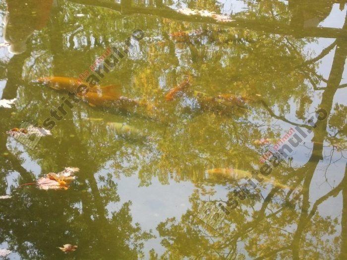 """Peștii din parc, un lux! Mii de euro """"se scurg"""" în iazul lor, într-un singur an"""