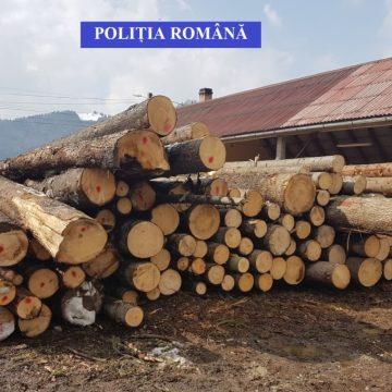 Hocus-pocus la Ocolul Silvic Dealul Negru. Un pădurar a făcut să dispară 13.5 metri cubi de lemn