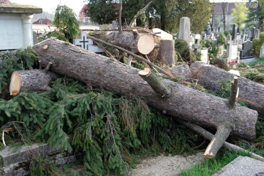 FOTO: Se taie copacii în Cimitirul Evanghelic. Se degradează istoria, se mutilează totul…