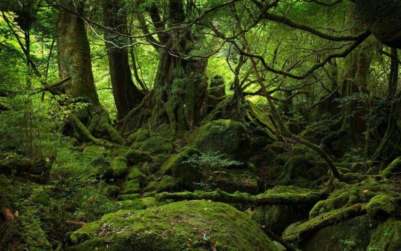 Bistrița-Năsăud, pe lista privilegiată a județelor cu păduri virgine