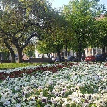 Primarul Crețu declară că Piața Centrală e drum și semnează hârtii că e spațiu verde