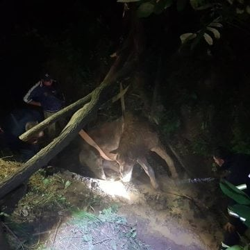 Un cal a căzut într-un pârâu, la Salva. Pompierii se chinuie să-l salveze