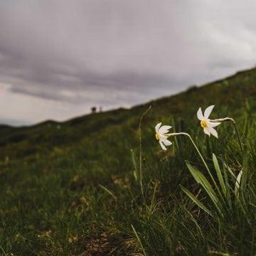 FOTO: Zeci de turiști au luat cu asalt Poiana cu Narcise! Peisajul este superb!