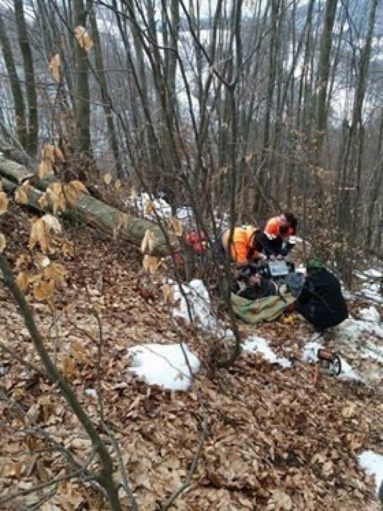 MINUNE: A scăpat cu viață, după ce a căzut un copac peste el, în pădure