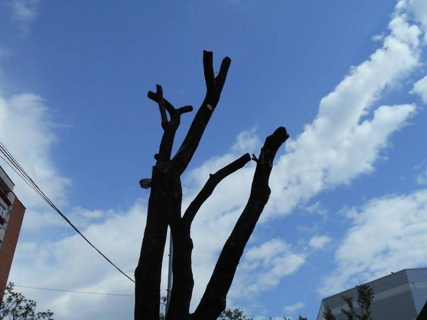 FII REPORTER: Copaci mutilați în Bistrița – fotografii deprimante!