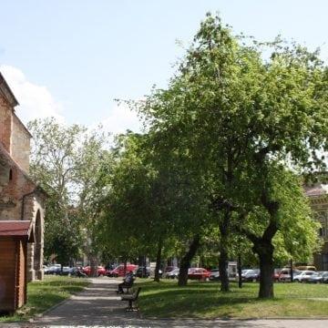 """Primăria Bistrița, dată în judecată pentru intenția de """"betonare"""" a Pieței Centrale și renunțarea la arbori"""