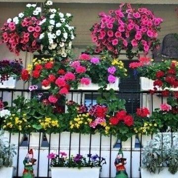 500 de lei pentru cel mai frumos balcon cu flori din Bistrița!