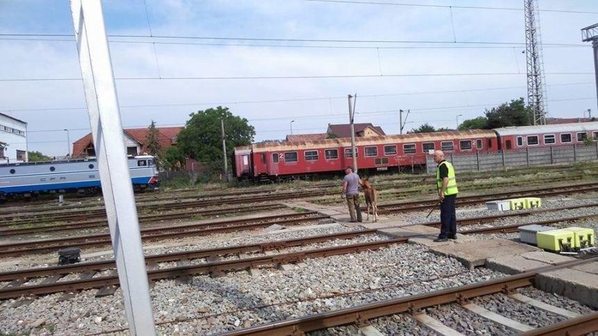 Rostul de dimineață:  O apariție neobișnuită, în gara din Bistrița, chiar între șinele de cale ferată…!
