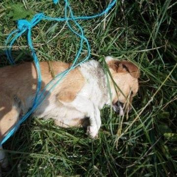 S-a aflat cine e minorul care a spânzurat un câine, fără pic de remușcare