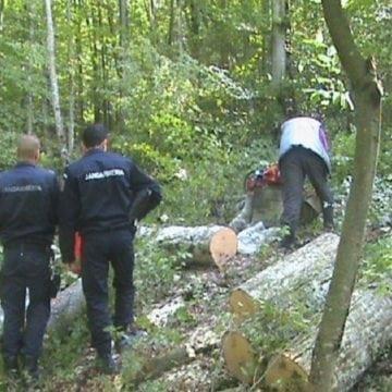 CÂT lemn s-a tăiat ilegal, în Bistrița Năsăud, anul trecut: