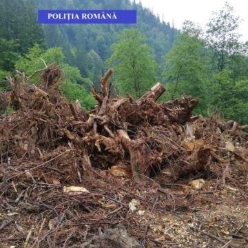 Calcul rapid pentru un afacerist din Rodna : 6 luni de ilegalități = pierderi de 12.100 lei