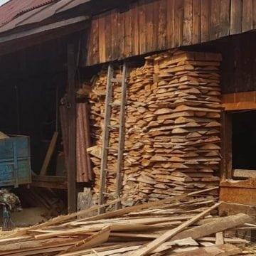 Afaceri ilegale cu lemn, la Rodna