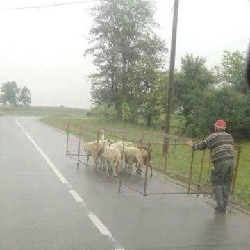 Rostul de dimineață. Pe drum: Iese la iveală o uimitoare metodă de transport animale…