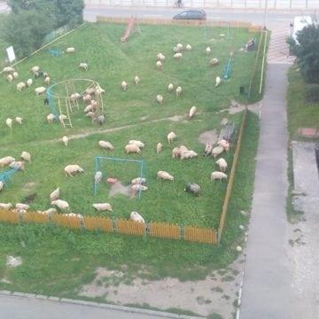 Rostul de dimineață: Surpriză de proporții, într-un loc de joacă destinat copiilor, în Bistrița europeană…!