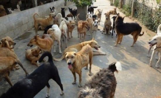 Bistrițeanul de pe Tărpiului, ce are curtea plină de câini, amendat și somat să intre în legalitate