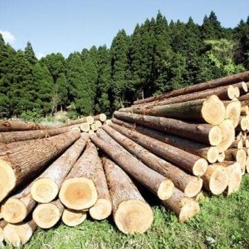 Cum a lăsat o firmă oamenii fără lemne de foc. Poliția a intrat pe fir