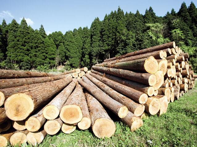 Iarna viitoare ne-ncălzim mai ieftin! Ce măsuri se iau pentru lemnele de foc: