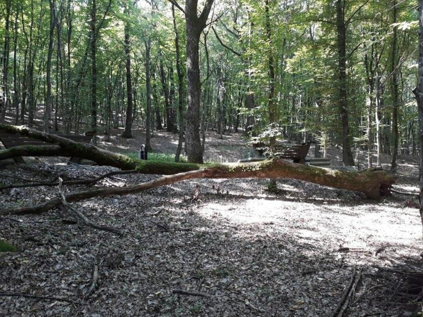 Cules de fructe din pădure, aproape fatal pentru un băiețel de 10 ani din Șanț. Ce s-a întâmplat