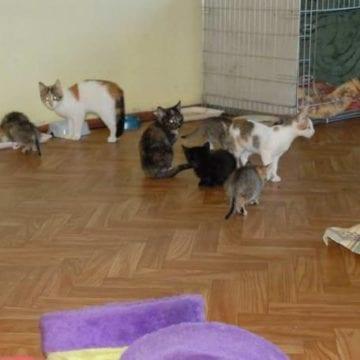Se caută o căsuță temporară pentru pisicile abandonate și bolnave