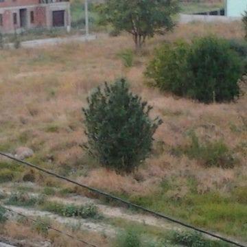"""Pericolul din iarbă: """"Otrava zeilor"""" atacă și în județul nostru"""