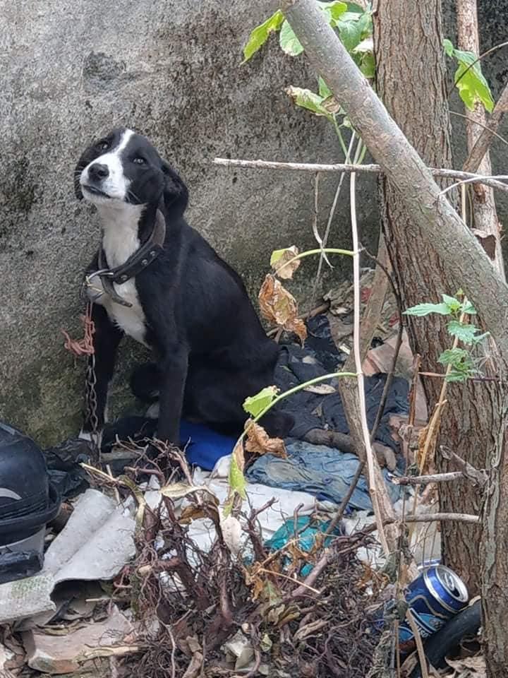 FOTO: Cruzime fără margini: A aruncat un câine într-o groapă, fără mâncare și fără apă