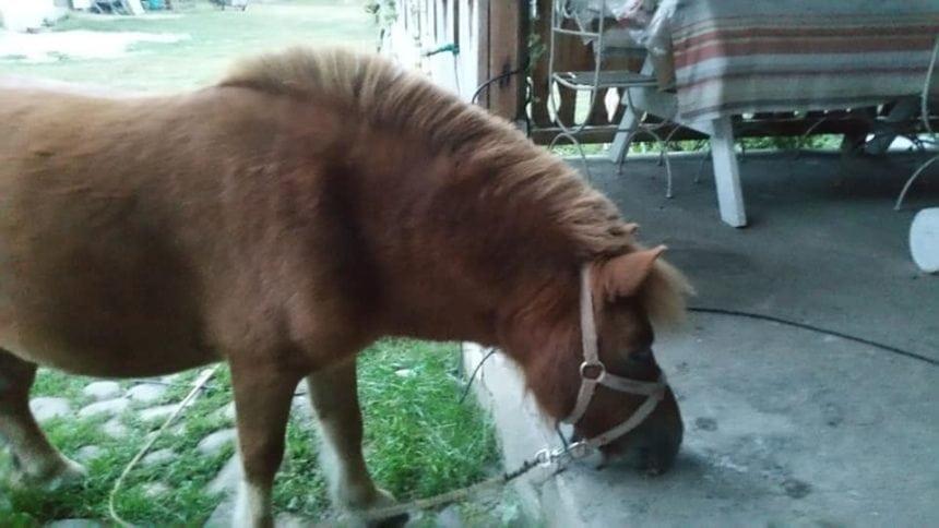 Au prins hoţii poneilor folosiţi pentru terapia copilaşilor cu dizabilităţi! Ce capete de acuzare li se mai aduc: