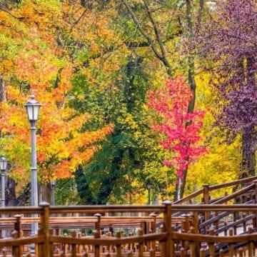 Rostul de dimineaţă:  Apariție uimitoare în Parcul Municipal!