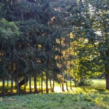 Parcul din Wonderland, o adevărată grădină botanică! Vor fi aduși copaci și plante din 7 țări, inclusiv din SUA