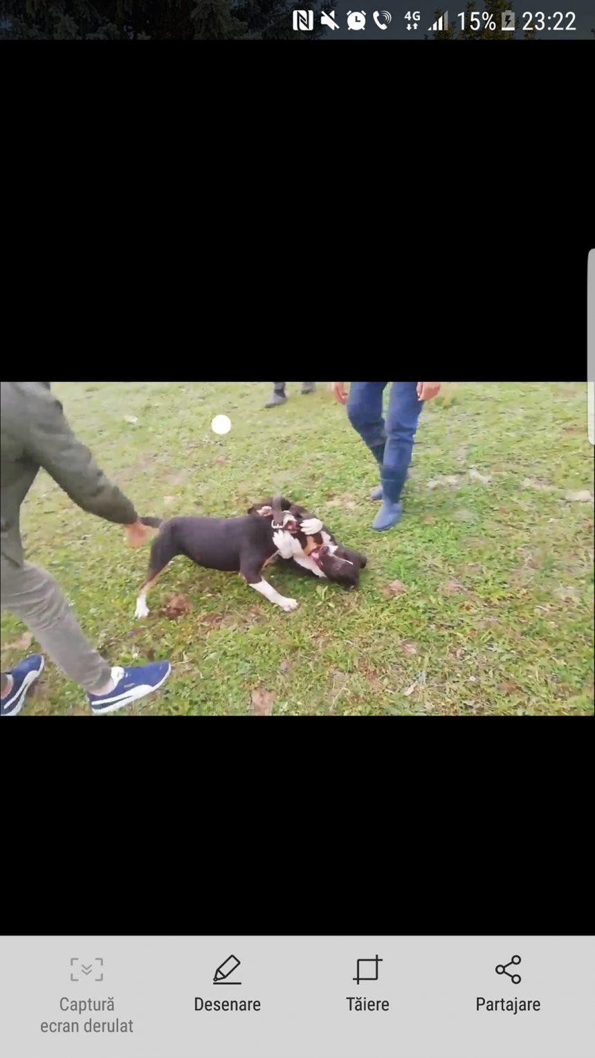S-au ținut de cuvânt! Iubitorii de animale au sesizat Poliția cu privire la Petriș, ringul de luptă al câinilor