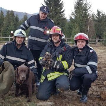 FOTO/VODEO: Toby, câinele salvator! A simțit de la distanță că un cățeluș e în pericol de moarte