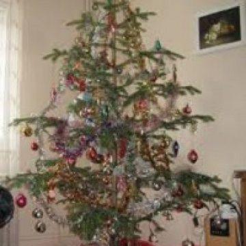 Vrei tradiționalul brad de Crăciun? Numai dacă sunt tăiați ilegal