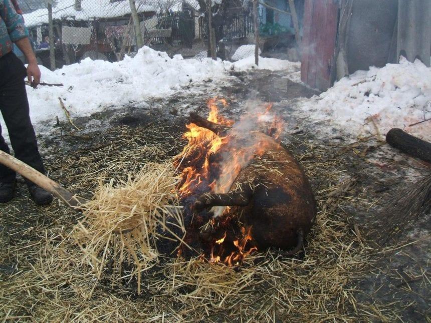 """Starea de alertă, prelungită! Doar """"tăiatul porcului"""" rămâne valabil din toată tradiția sărbătorilor de iarnă"""