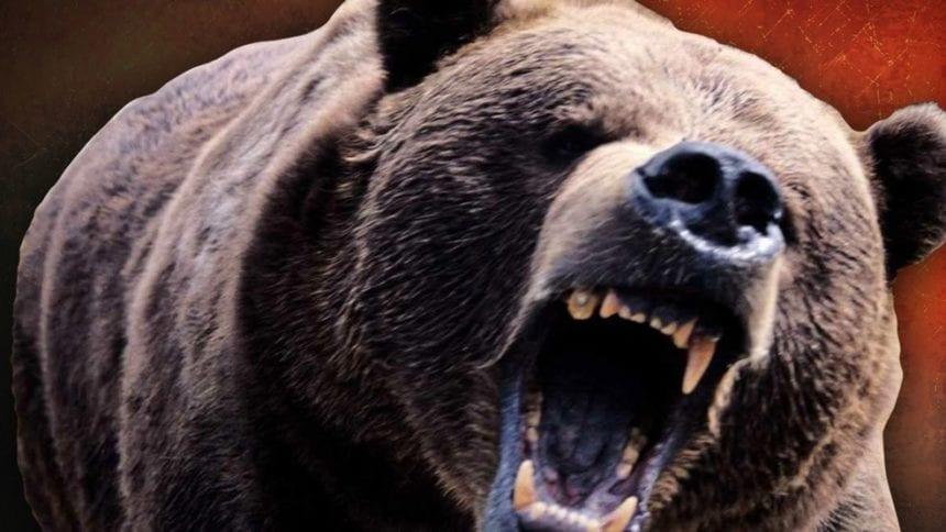 Ursul atacă din nou: Un cioban, mușcat de urs în Petriș