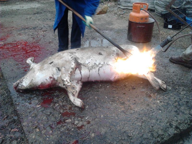 Inspectorii, în control! Sfaturi esențiale referitoare la carnea de porc