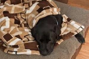 Încălzește o viață, cu pături vechi pe care nu le mai folosești!