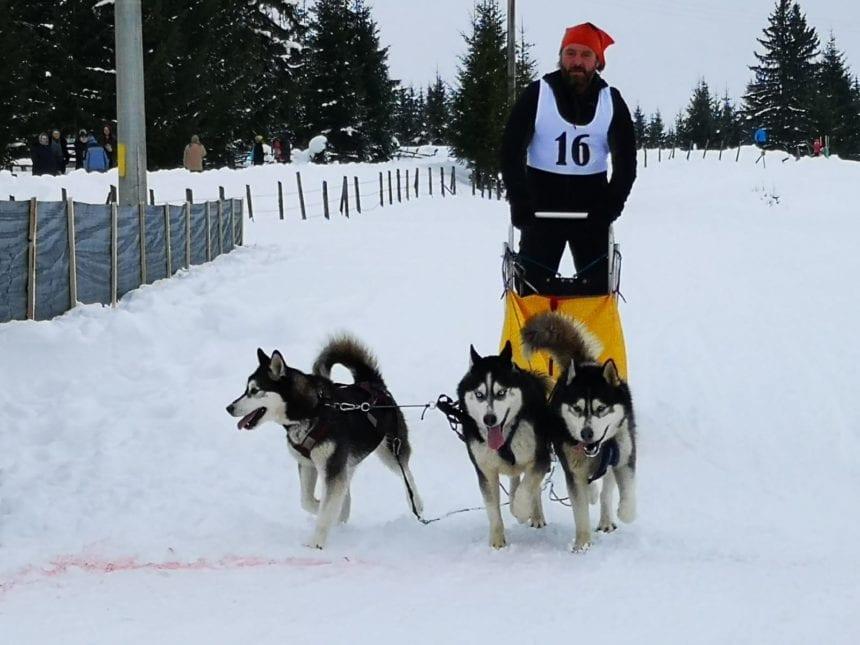 SPECTACULOS! Concursul cu câini nordici din Pasul Tihuța, inclus în documentarul de promovare a României – Wild Carpathia
