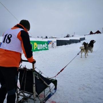 FOTO – Cei mai frumoși câini nordici s-au întâlnit în Pasul Tihuța. Drumul istoric ar putea găzdui competiții de renume european sau mondial