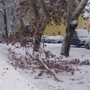 FOTO: Atenție să nu vă cadă crengile în cap! Sub greutatea zăpezii, acestea cedează