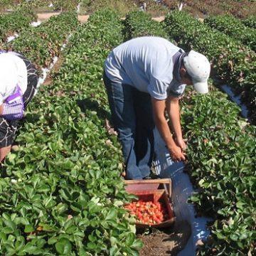 OCAZIE: 200 locuri de muncă în Spania pentru bistriţeni!