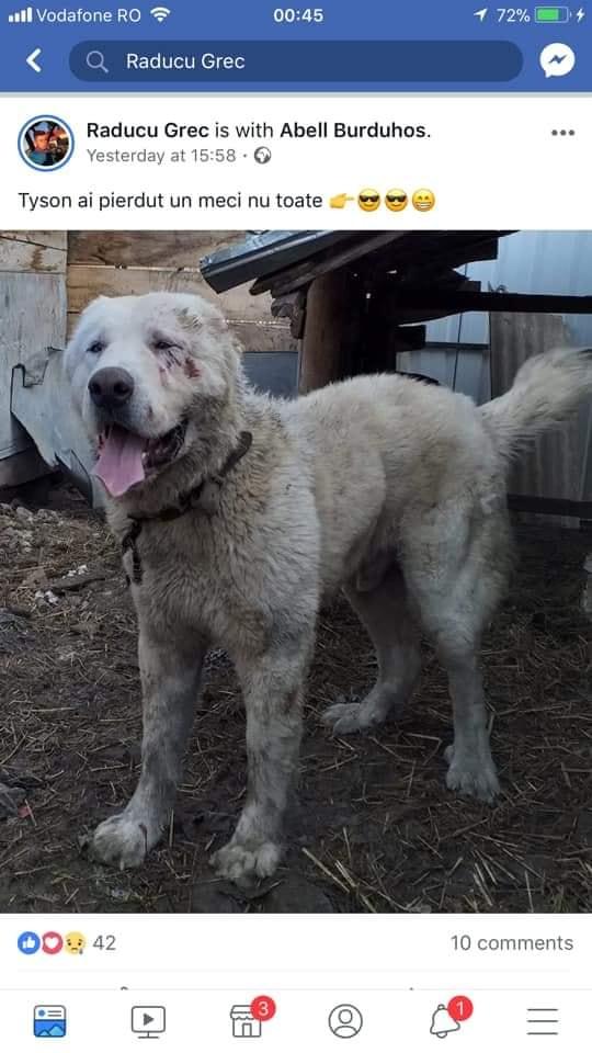 Ringul de luptă al câinilor s-a mutat la Dumitra! Polițiștii fac cercetări