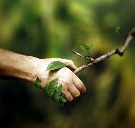Se-ntâmplă și minuni: Proiect ce oprește, anual, tăierea ilegală a opt milioane de metri cubi de lemn!