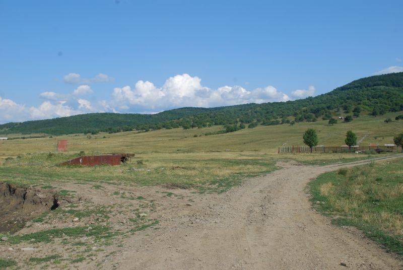 Un bistrițean cere Primăriei să-i lase oile să pască pe Dealul Cocoș