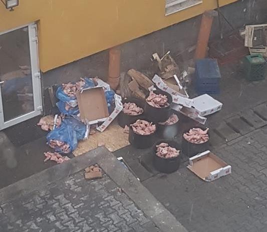 FOTO/VIDEO FII REPORTER Pulpe dezghețate de pereți, în spatele unui restaurant din Bistrița