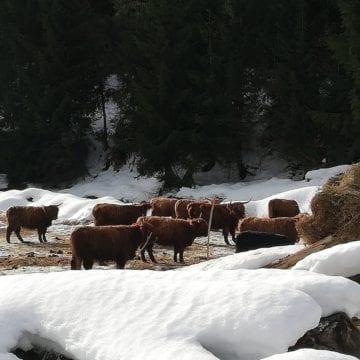 """""""Iacii"""" de la Romuli opresc călătorii din drumul lor! Ce sunt nemaivăzutele mamifere:"""