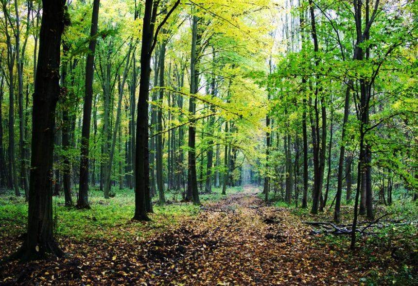 INCREDIBIL! Pădurile țării, scoase la vânzare pe site-urile chinezești. Cu cât se vinde o pădure în vârstă de 80 de ani