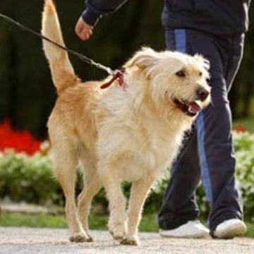 HALUCINANT: Amendată că nu a plimbat câinele în spațiile special amenajate