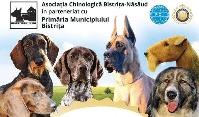 Tombolă cu premii surpriză și spectaculoase demonstrații de dresaj, în weekend, la Bistritzer Burg Dog Show!