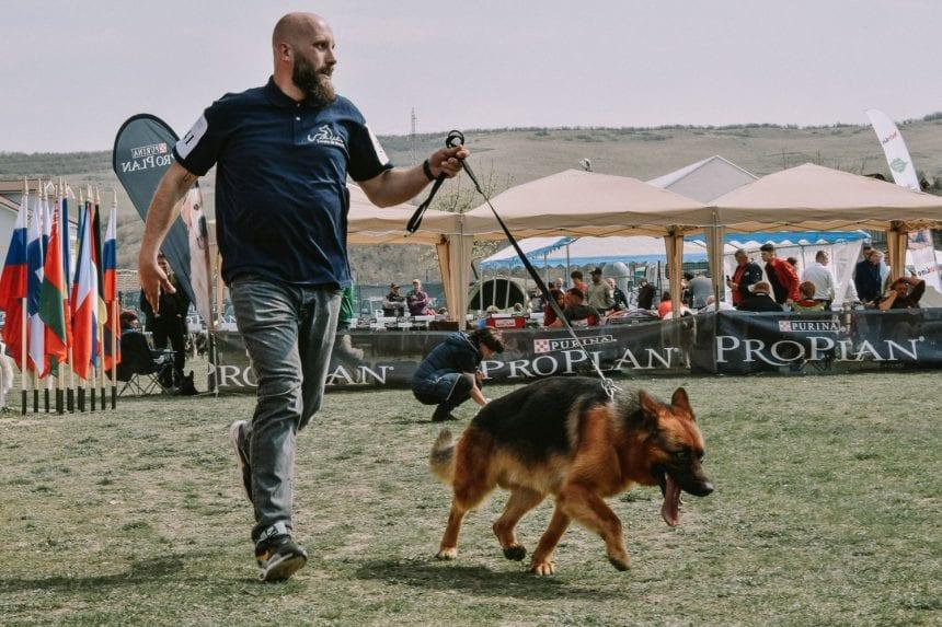 FOTO/VIDEO – Frumusețe pe patru labe! Cei mai frumoși 1.500 de câini din țară și din străinătate și-au dat întâlnire la Viișoara