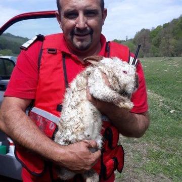 FOTO: Iepuraș salvat din foc, în ultima clipă, de un pompier. Animalului i s-a administrat inclusiv oxigen