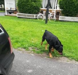 FII REPORTER: O bistrițeancă se teme să mai iasă din casă!
